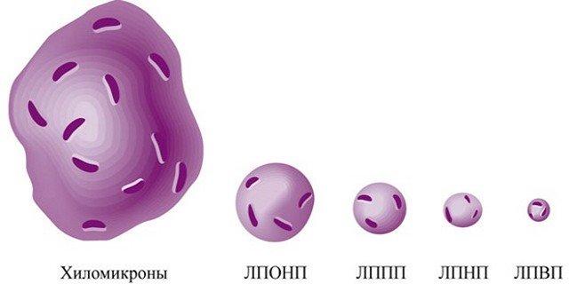 Липопротеины разных размеров